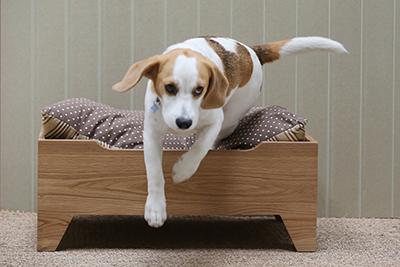 Dog-basket-and-bedding